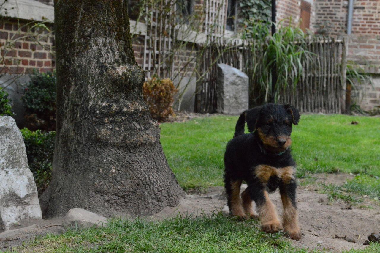 Puppy Walking On Ground