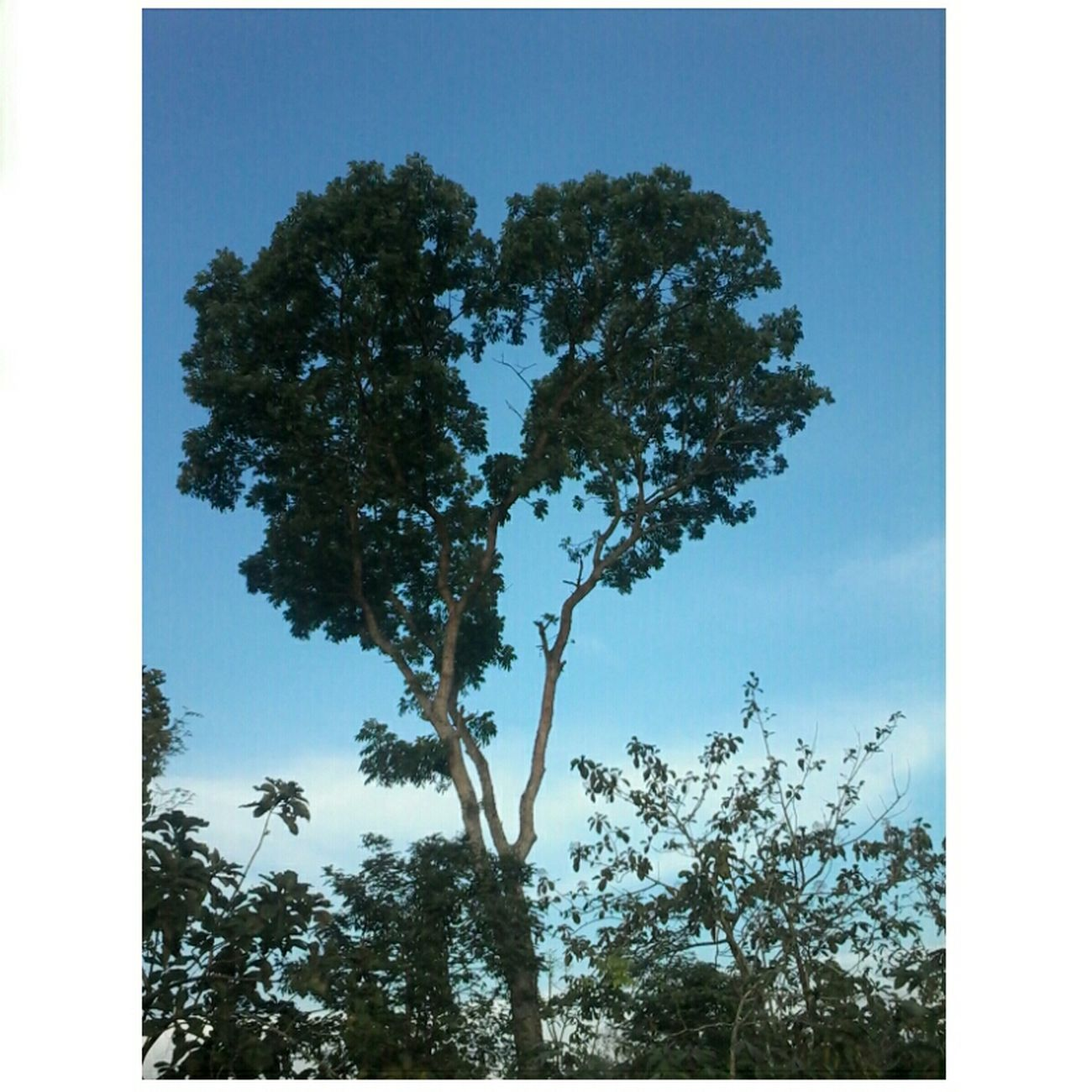 The tree of love ♥ Walking Around Enjoying The Sun Tree And Sky First Eyeem Photo