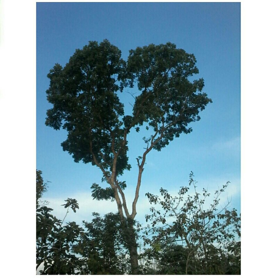 The tree of love ♥ Walking Around Enjoying The Sun Tree And Sky First Eyeem Photo
