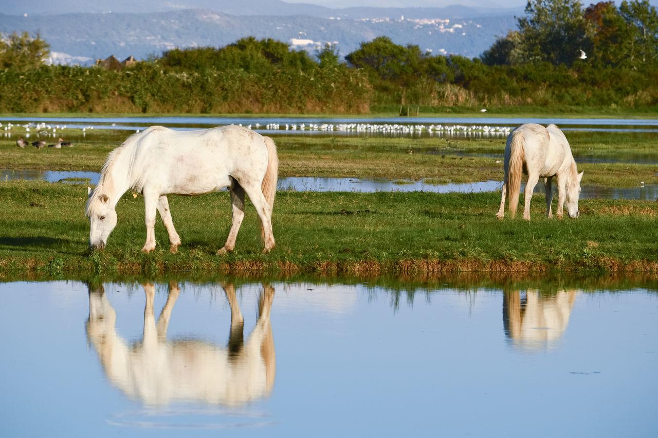 Horses Grazing On Lakeshore