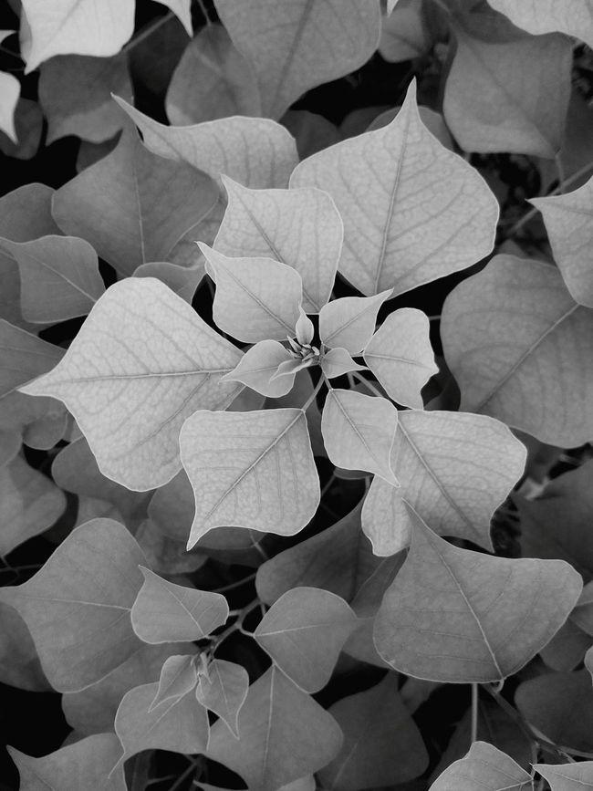 Leaf 🍂 Small Tree Taking Photos