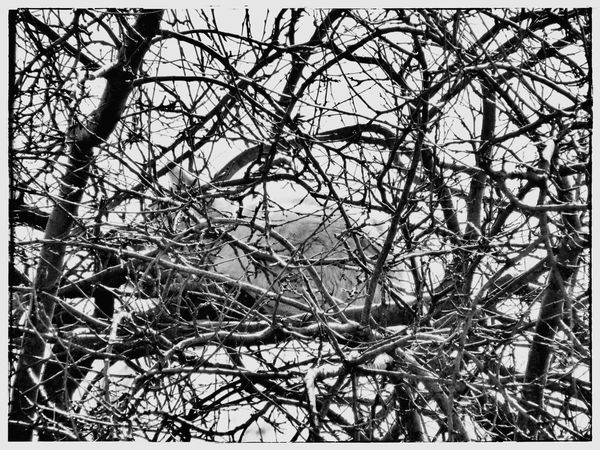 Find the cat! Cat Find Can You Find The Hidden...? Tree Black And White