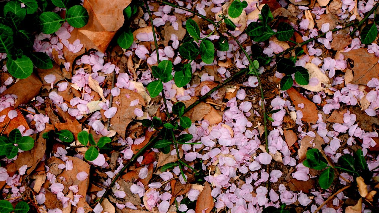 Fallen Blossoms Photography Qingming Festival Pink Color Flower Sakura