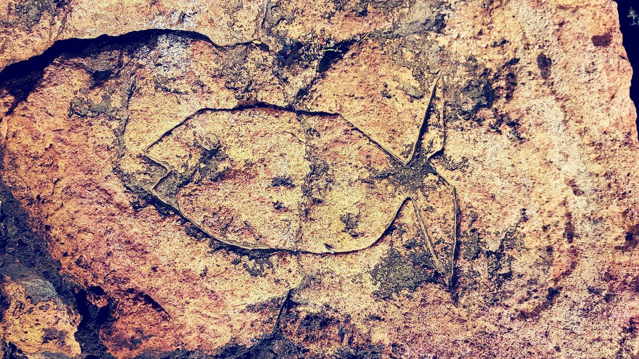 Backgrounds Full Frame Textured  Abstract No People Close-up Pattern Nature Indoors  Day Fish Rock Art Old Or New Outdoors Android Man Made Burnt Orange