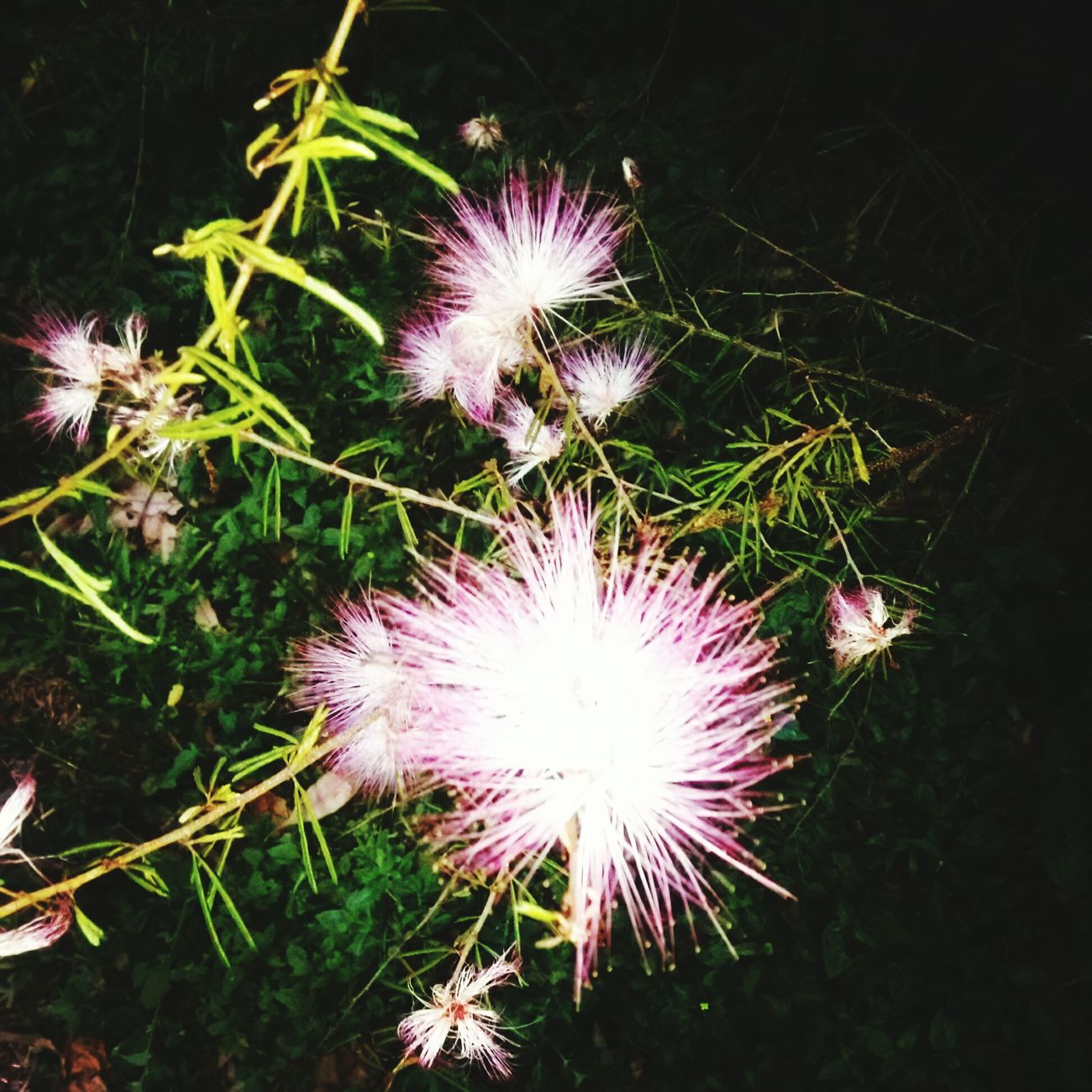 Maravillas De La Naruraleza Picking Flowers  Flowers Nature Flores Brazil Flowers