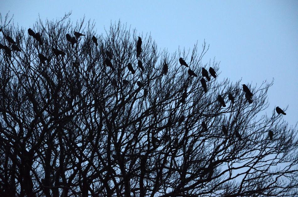 Beautiful stock photos of tree, Bare Tree, Beauty In Nature, Bird, Clear Sky
