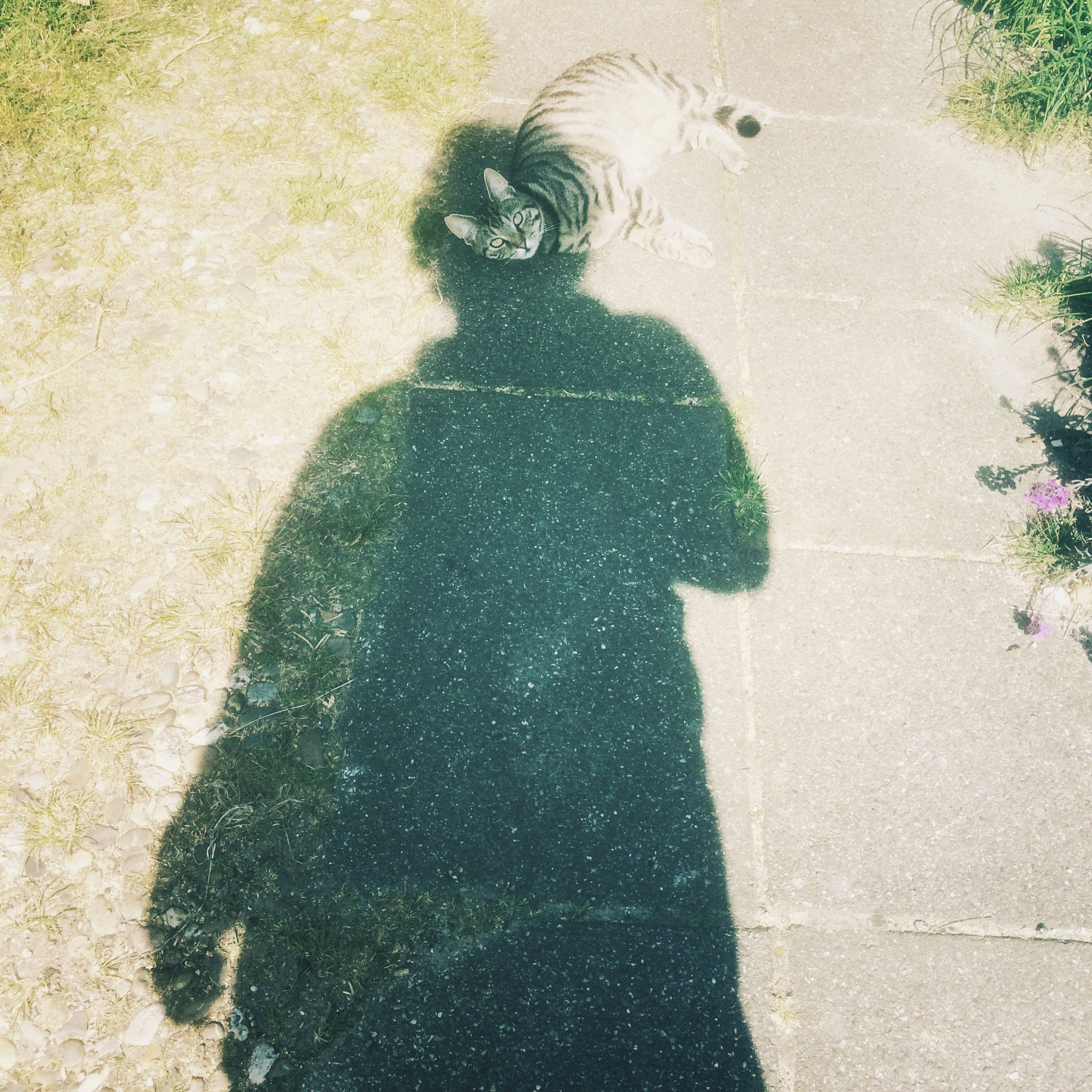shadow, focus on shadow, high angle view, lifestyles, sunlight, leisure activity, street, outdoors, men, day, standing, full length, person, unrecognizable person, road, walking, footpath, silhouette
