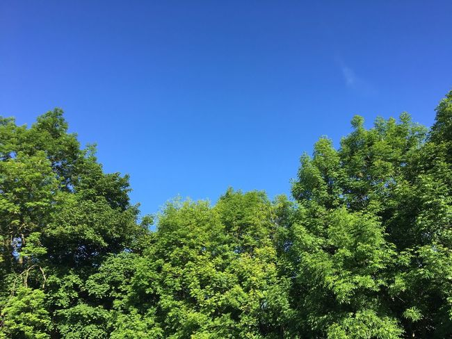 Beauty In Nature Tree Nature Growth Green Forest Blue Low Angle View Day Clear Sky No People Blue Sky Beauty In Nature Outdoors