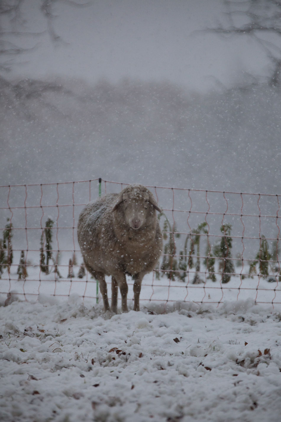 Beautiful stock photos of schneeflocken,  Animal Themes,  Animals In The Wild,  Day,  Farm