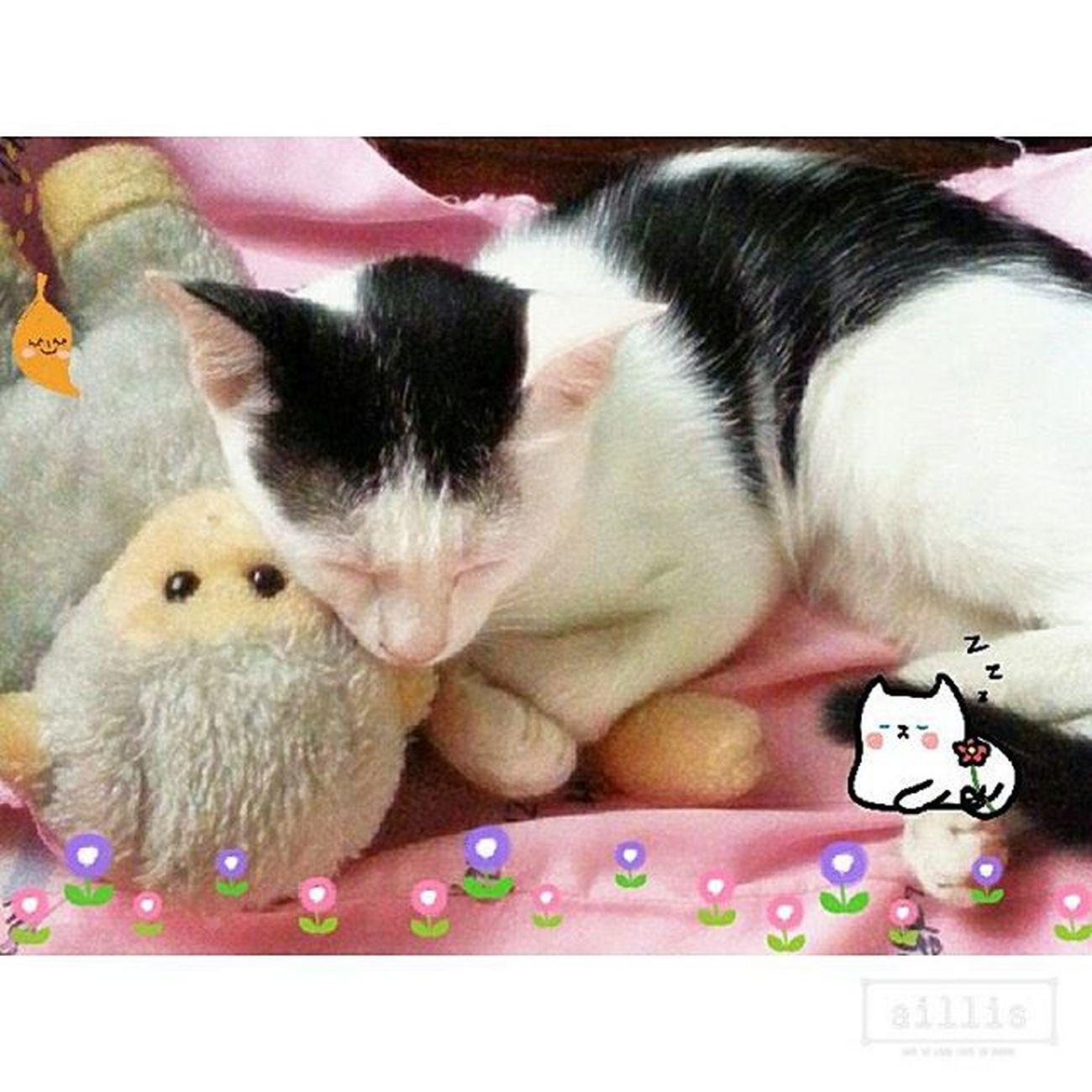 don't disturb...เวลานอนของนาง ให้ลิงเล่นกะแมว ให้แมวเล่นกะลิง ยูโรของข้า