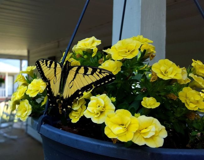 Taking Photos Enjoying Life Butterfly Nature Outdoors Close-up Tranquil Scene Yellow Check This Out Relaxing Selective Focus