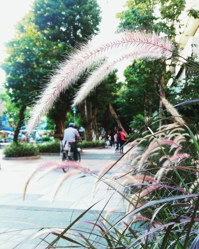 Taipei City Afternoon Tea Sunset Park Keep Walking