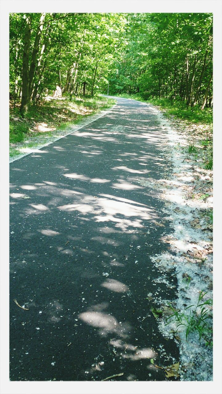 tree, nature, outdoors, day, no people, forest, road, growth, water, beauty in nature