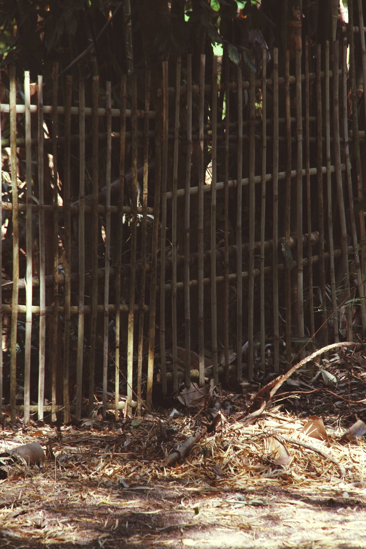 Bamboo Fence Dry Leaves Outdoors No People Fall Season Brown Local Life in North Thailand South East Asia