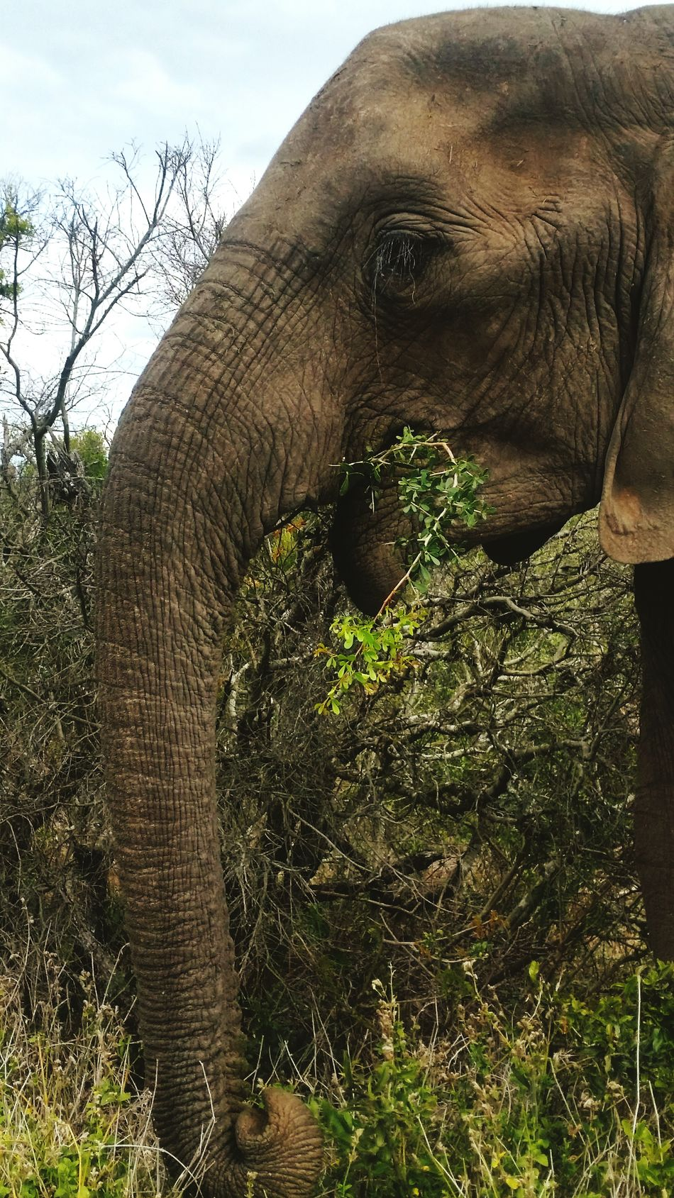 In memory of Hilton Crous Animal Wildlife No People Day Animals In The Wild Elephant Nature Outdoors Mammal Tree African Elephant Animal Themes Sky Tree Area Beauty In Nature Nature Safari Animals Animal Trunk Animals In The Wild One Animal Animal Close-up Tree Tusk