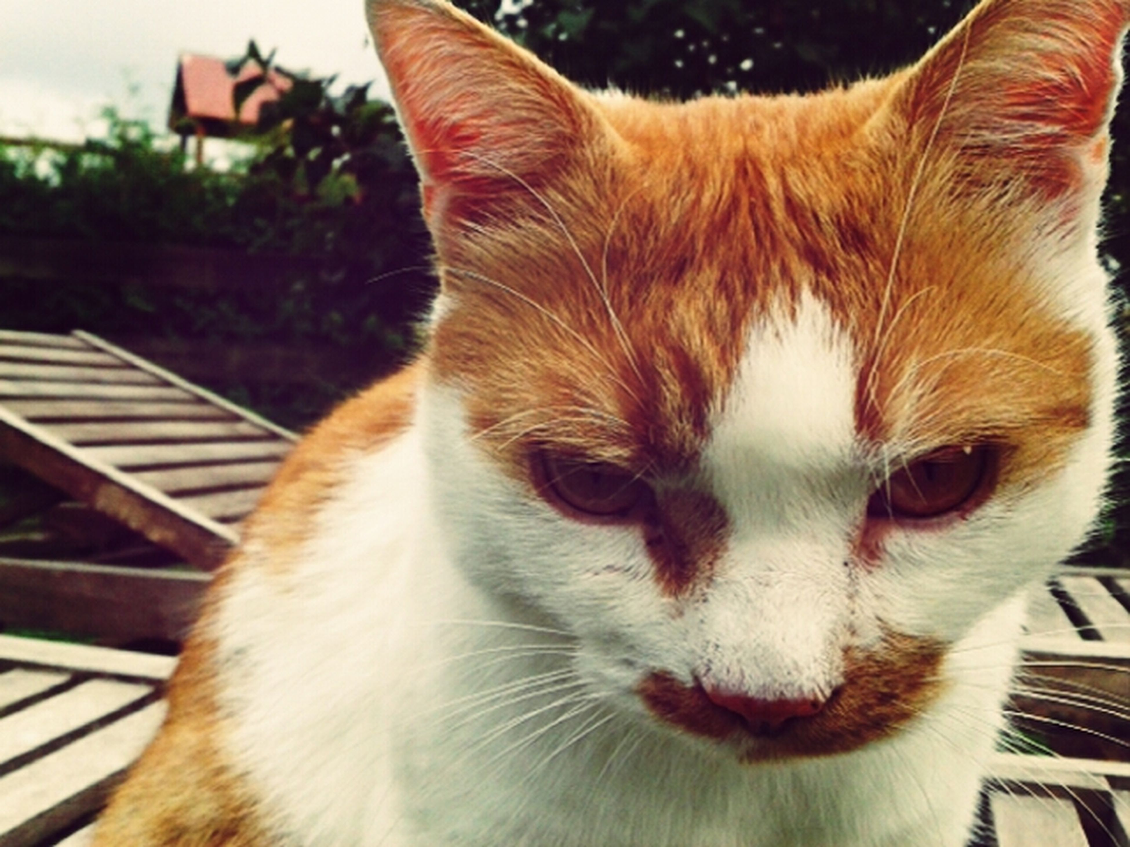 pets, domestic cat, domestic animals, one animal, animal themes, mammal, cat, feline, whisker, close-up, indoors, animal head, looking away, focus on foreground, relaxation, no people, portrait, home interior, alertness