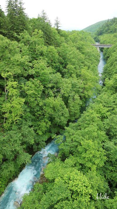 美瑛町 白金温泉 しらひげの滝 滝 Waterfall 青い川 美瑛川 Bluewater Blueriver Hokkaido Japan 森 山 樹木 川 Sky