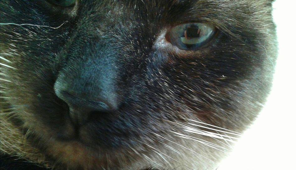Cat VSCO Vscocam