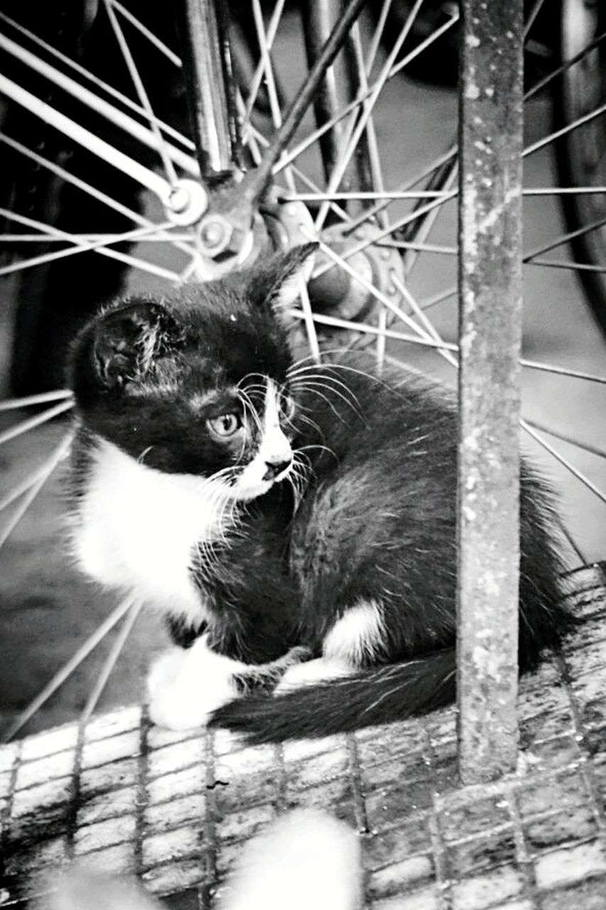 animal themes, mammal, pets, domestic cat, one animal, domestic animals, feline, no people, sitting, outdoors, day