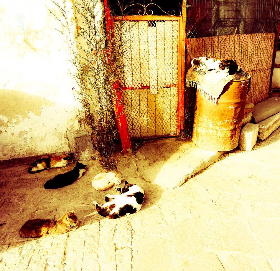 Ραστώνη. Filterphotography Filtered Image Photoshopexpress Cats Thessaloniki Greece City Retro Style Crosprocess Check This Out