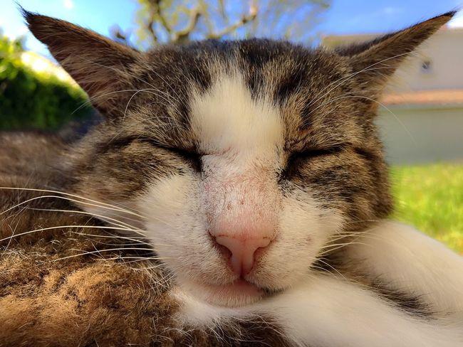MIMINE se repose après une sieste bien méritée 😜😹😹😹 Mon Ami Le Chat Chat CHATFIE Catfie Cat Cat Of EyeEm