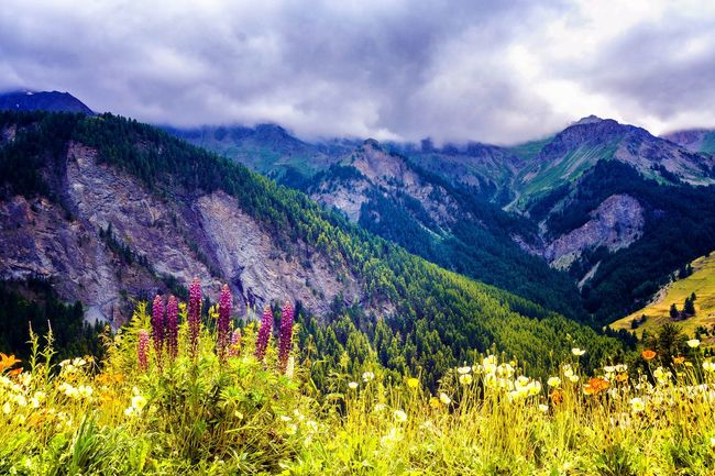 French Alps Mountains Summer2016 Sky And Clouds The Essence Of Summer Hidden Gems  Queyras Landscape Landscape_Collection Hiking Mountain View Mountain Trail Flowers Flowers, Nature And Beauty Mountains Flowers Color Of Life