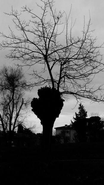 Albero Rami Autunno  Tree Autumn