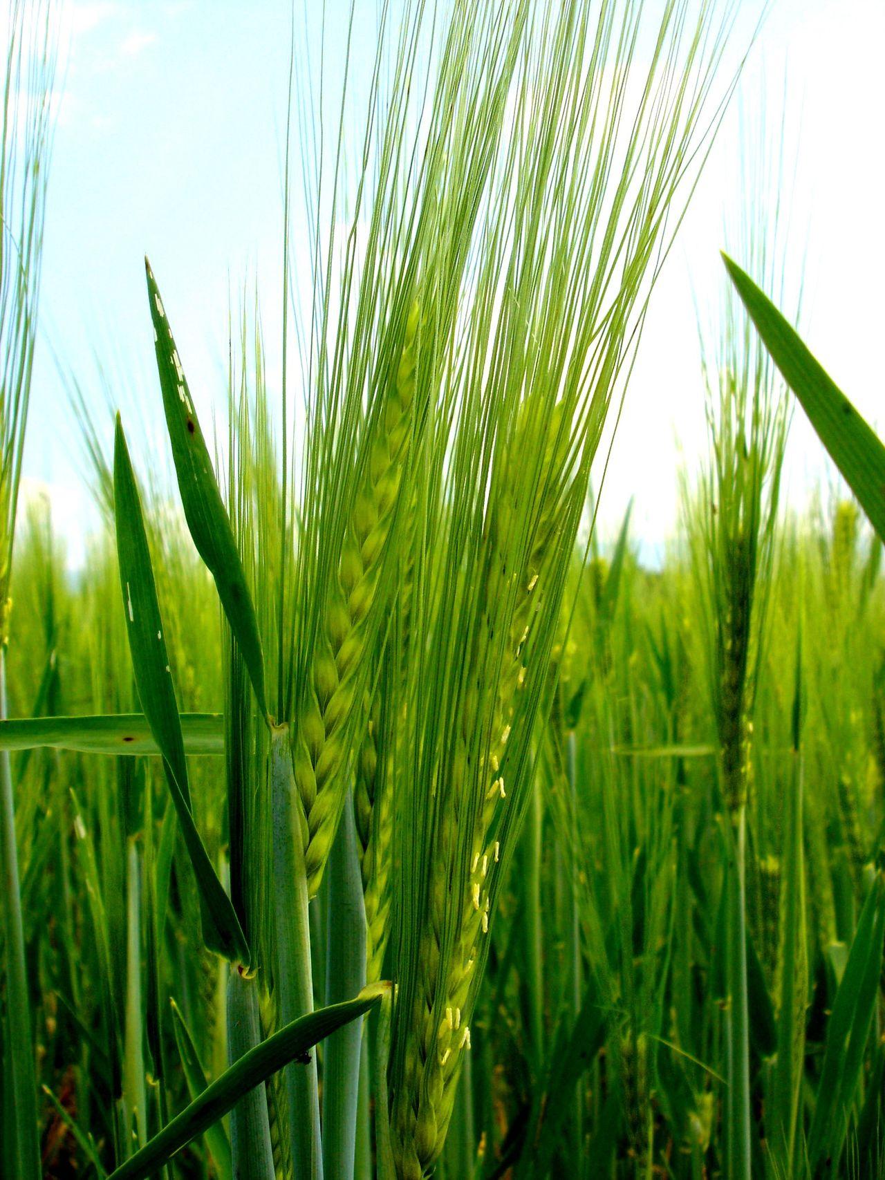 Soltau Grass Green