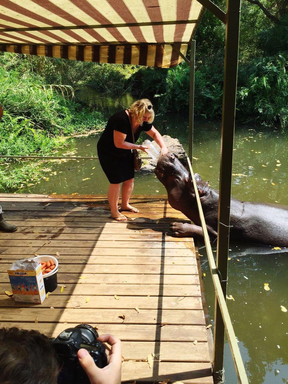 Jessica Hypo Nijlpaard South Africa Hoedspruit