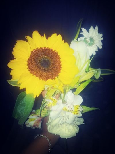 Sunflower ♥ Enjoying Life Hello World