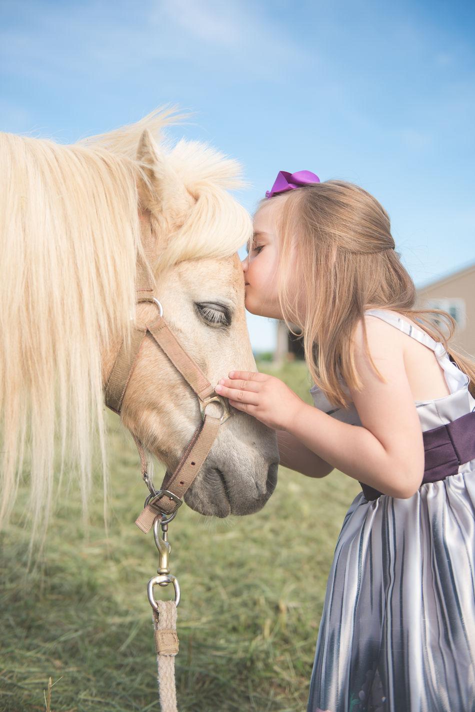 Beautiful stock photos of pferde, horse, one animal, domestic animals, sky