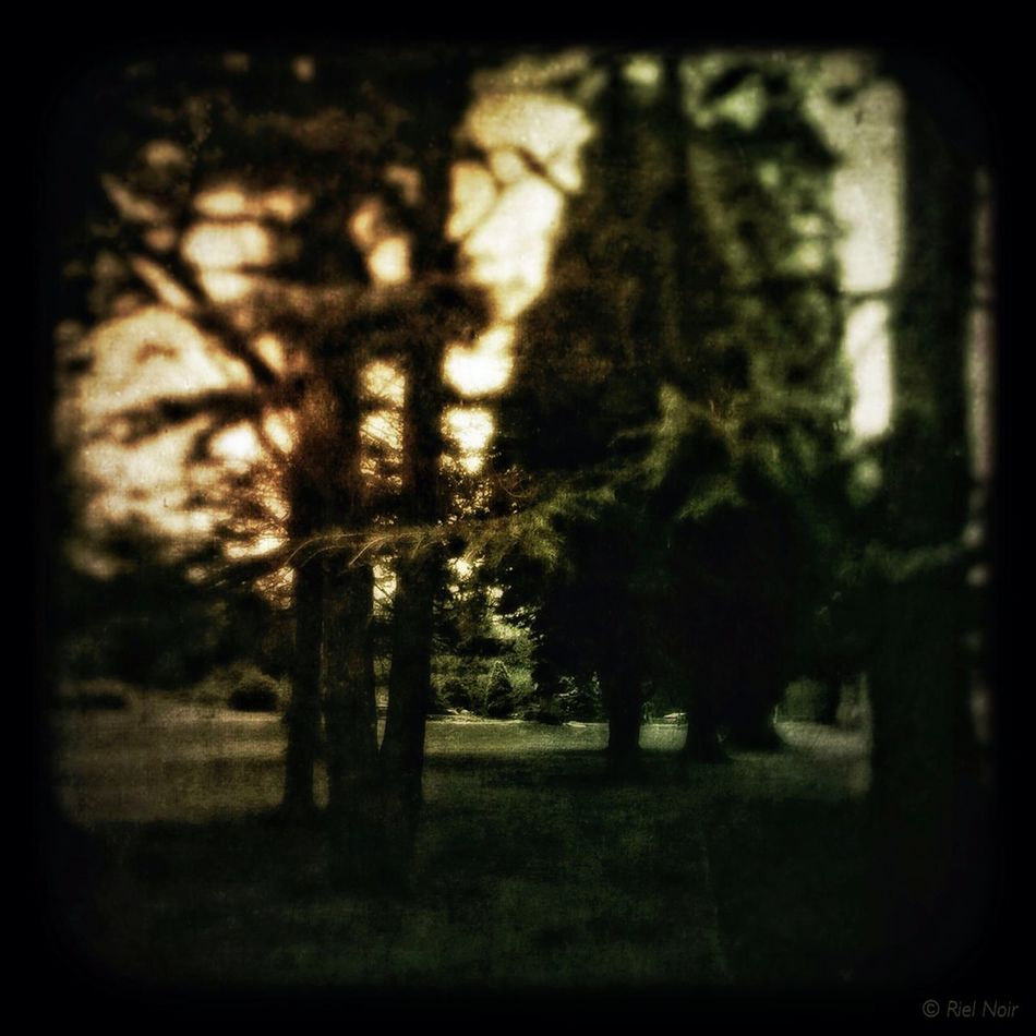 How many trees make a forest,... #iPhone5S #iPhone #iPad #iPhoneography #PittencrieffPark #Dunfermline Theappwhisperer Dunfermline AMPt_community Mobile Photography Mobileartistry facebook.com/artistRielNoir