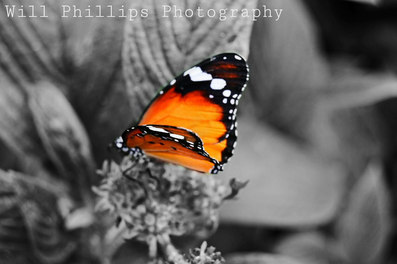 Butterfly Nature Whipsnade Zoo Isolated Color Black And White Butterfly Close Up