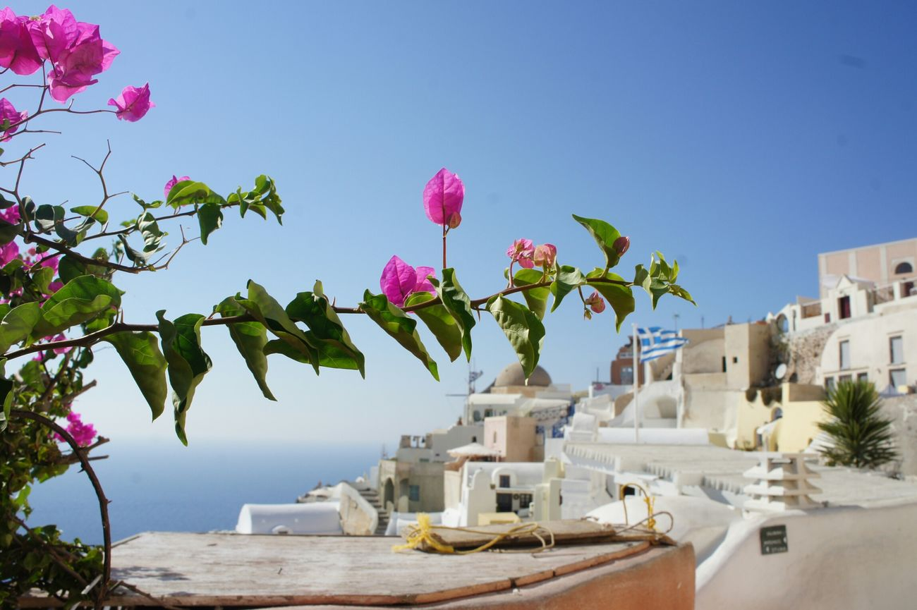 Summer Views Santorini, Greece Colors Pink Focus Oia Nofilter Lovetheflower