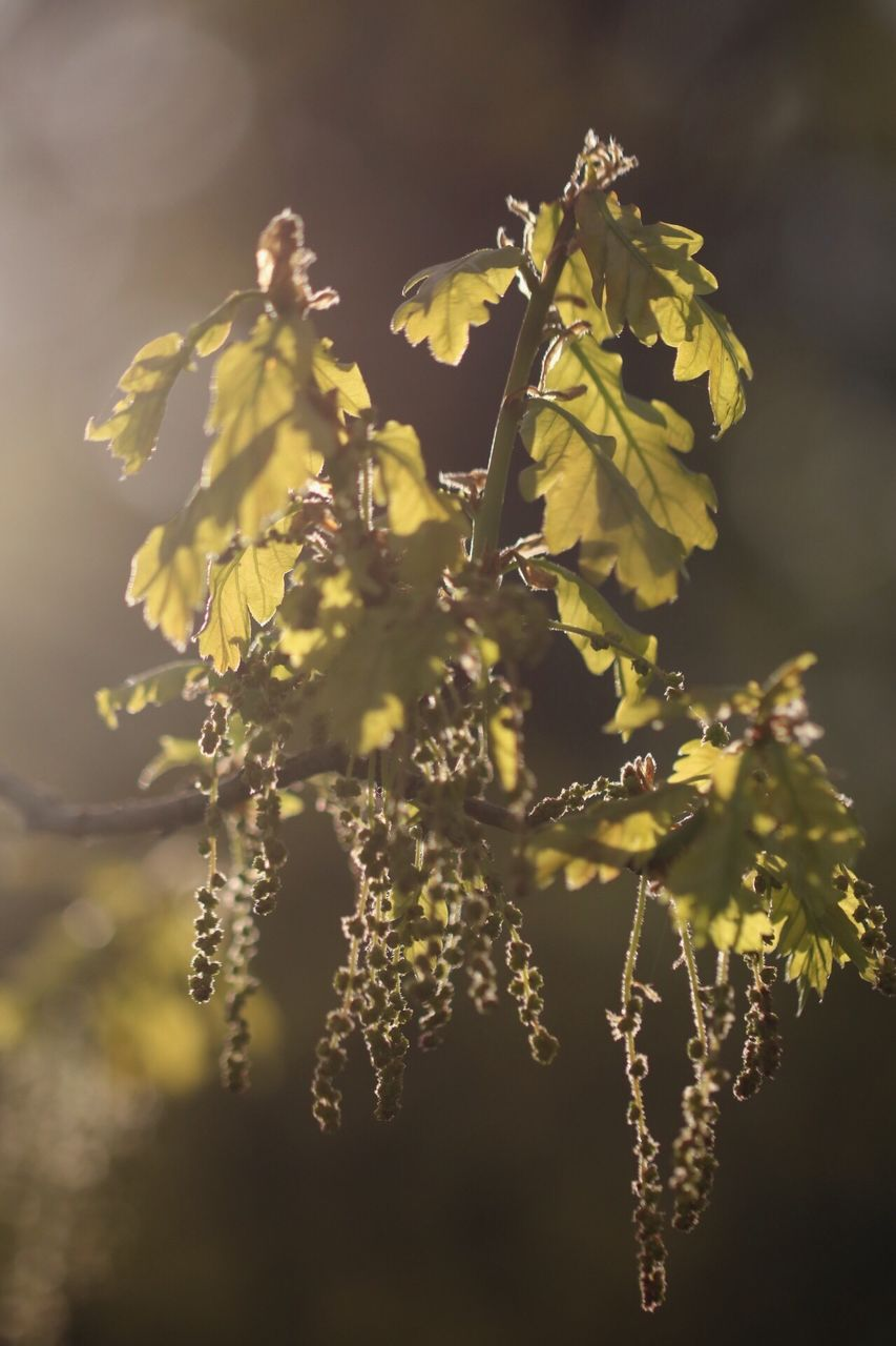 growth, nature, plant, no people, beauty in nature, outdoors, flower, day, branch, tree, close-up, fragility, freshness