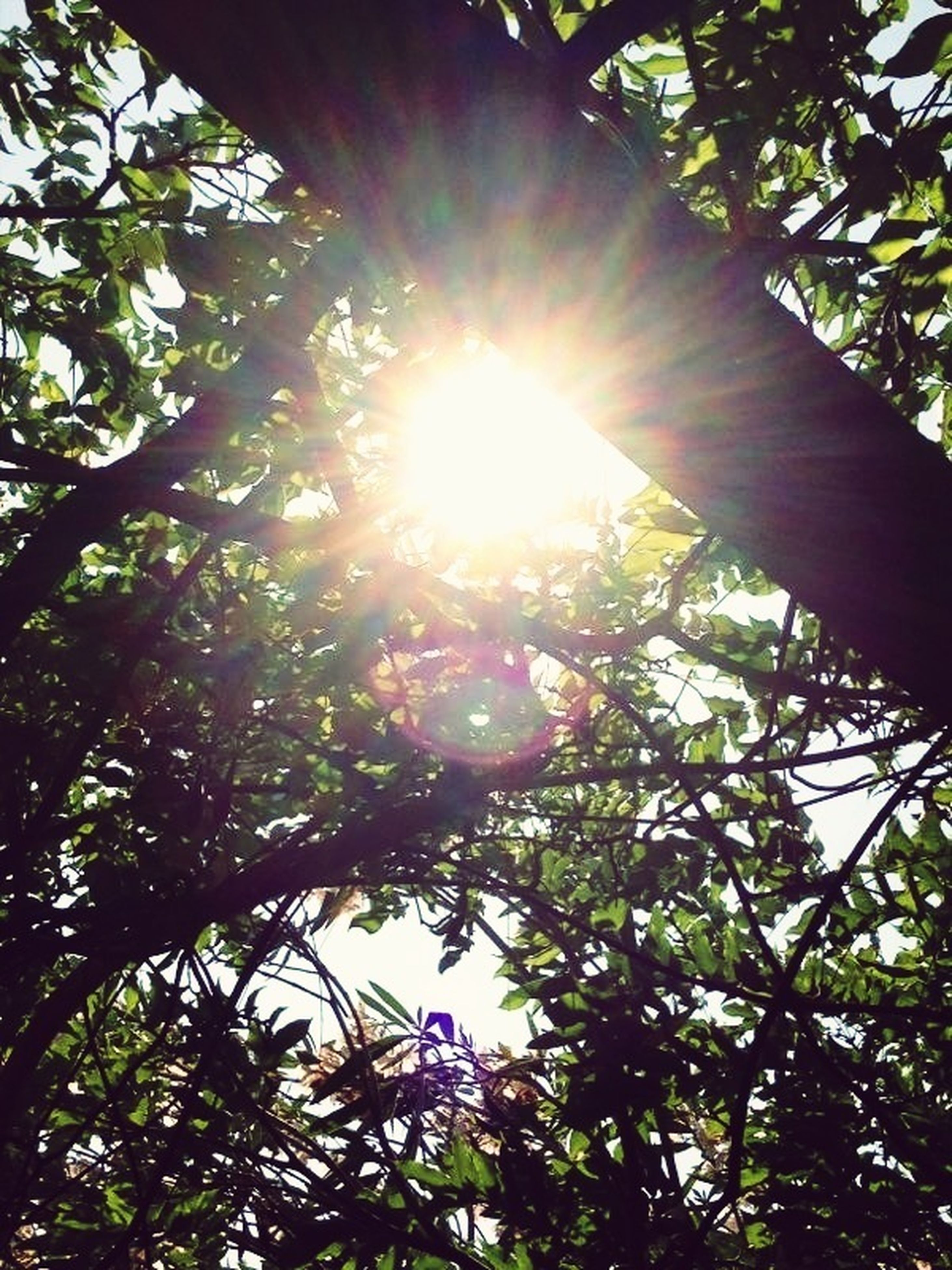 tree, sun, low angle view, sunbeam, sunlight, growth, branch, lens flare, nature, beauty in nature, tranquility, sunny, sky, bright, day, outdoors, green color, leaf, no people, scenics