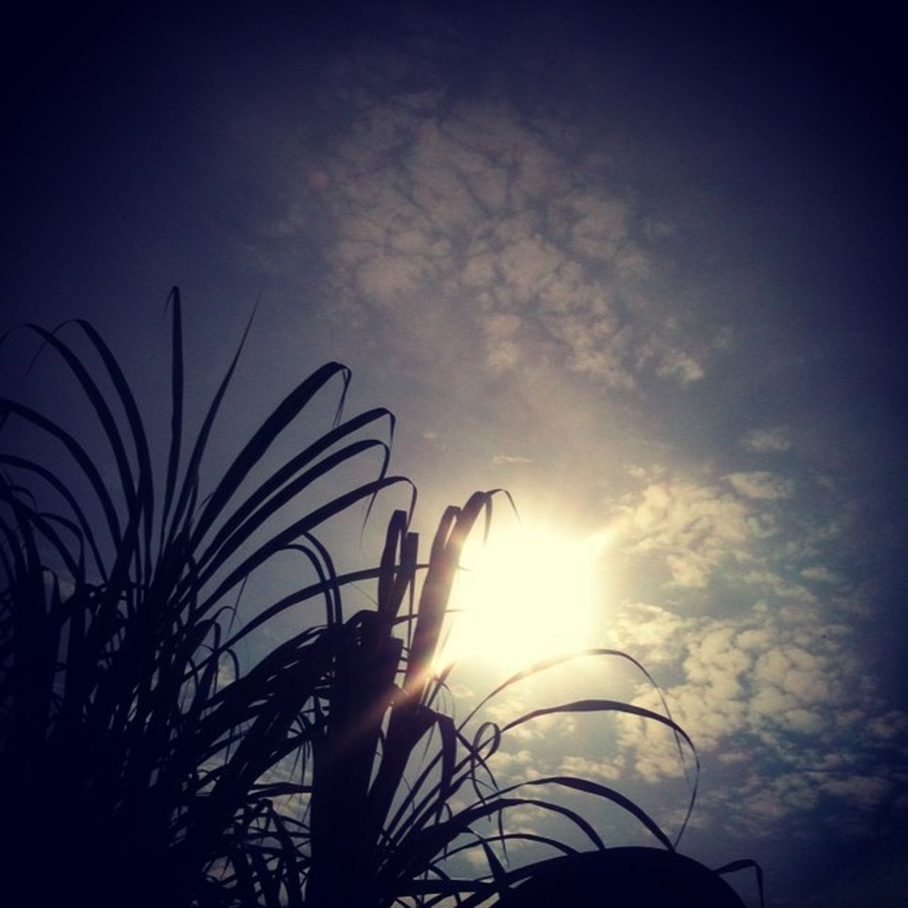 Acordei com o sol me dando Bom Dia DIALINDOOO FeitoPeloMeuPai Boomdiiaa