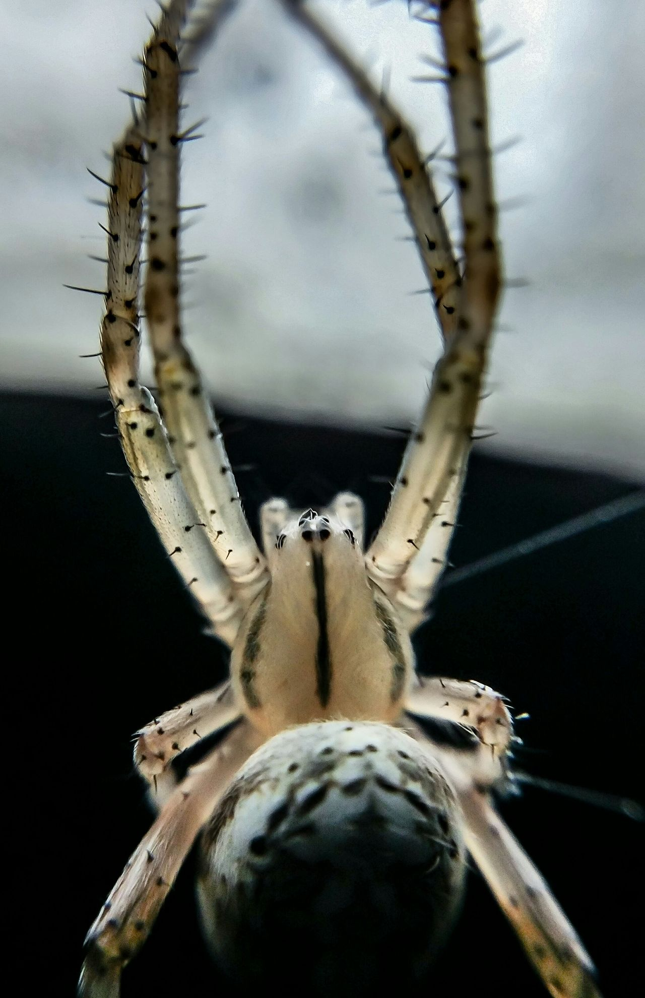 Beautiful stock photos of spider's, Animal Leg, Animal Themes, Animal Wildlife, Animals In The Wild