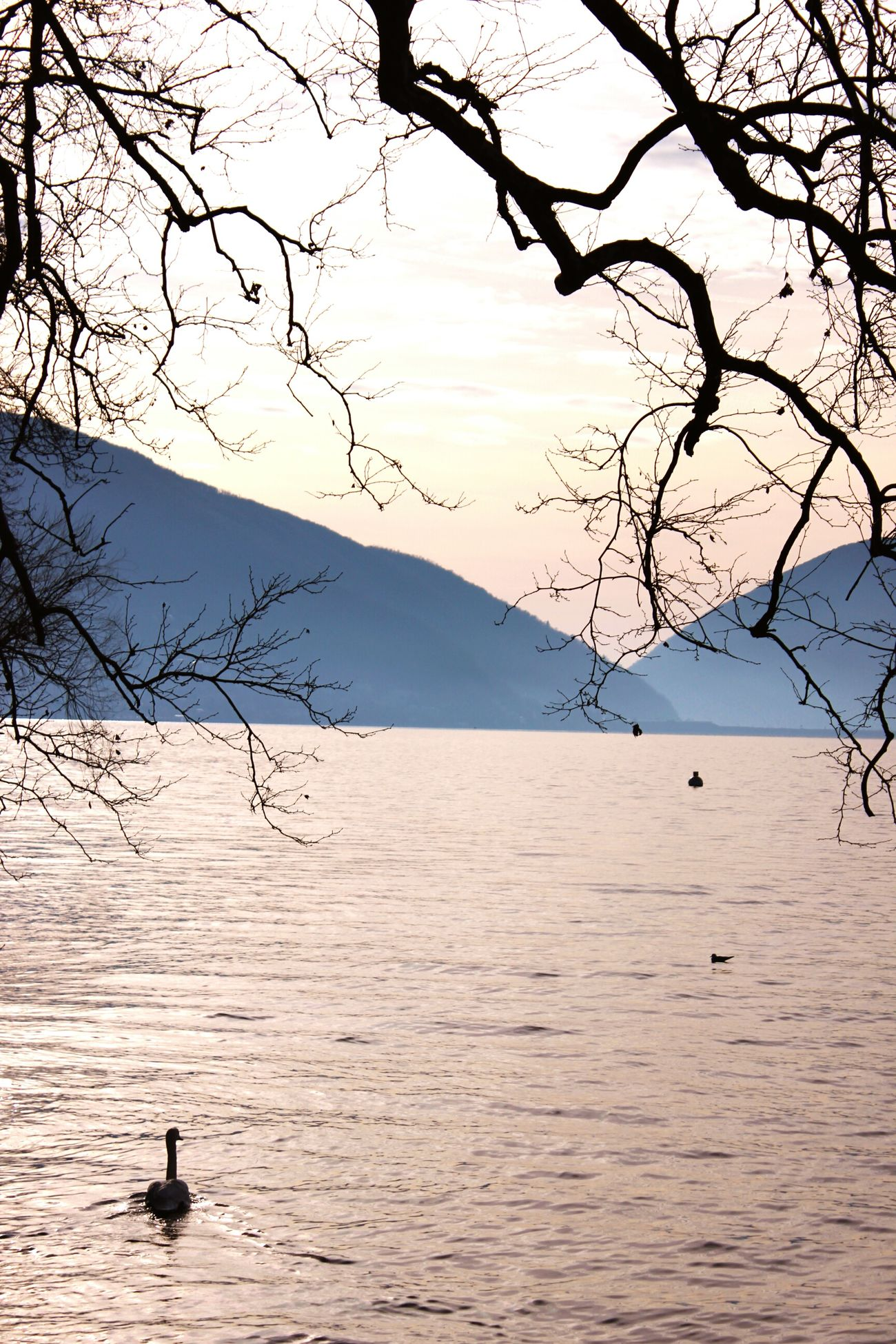 🏞 Lugano, Switzerland Water Nature Outdoors Sky Tree Beauty In Nature Animal Themes Swan Lake Mountains Sunlight Perfectview