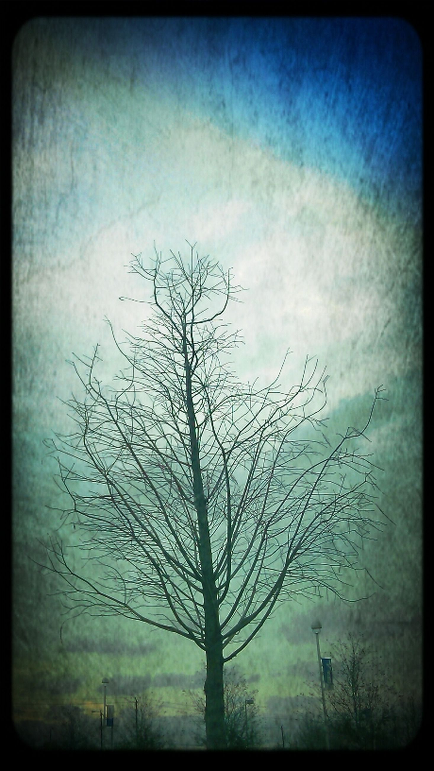 transfer print, bare tree, auto post production filter, tree, sky, branch, tranquility, tranquil scene, nature, low angle view, beauty in nature, scenics, cloud - sky, tree trunk, outdoors, dead plant, no people, silhouette, day, cloud