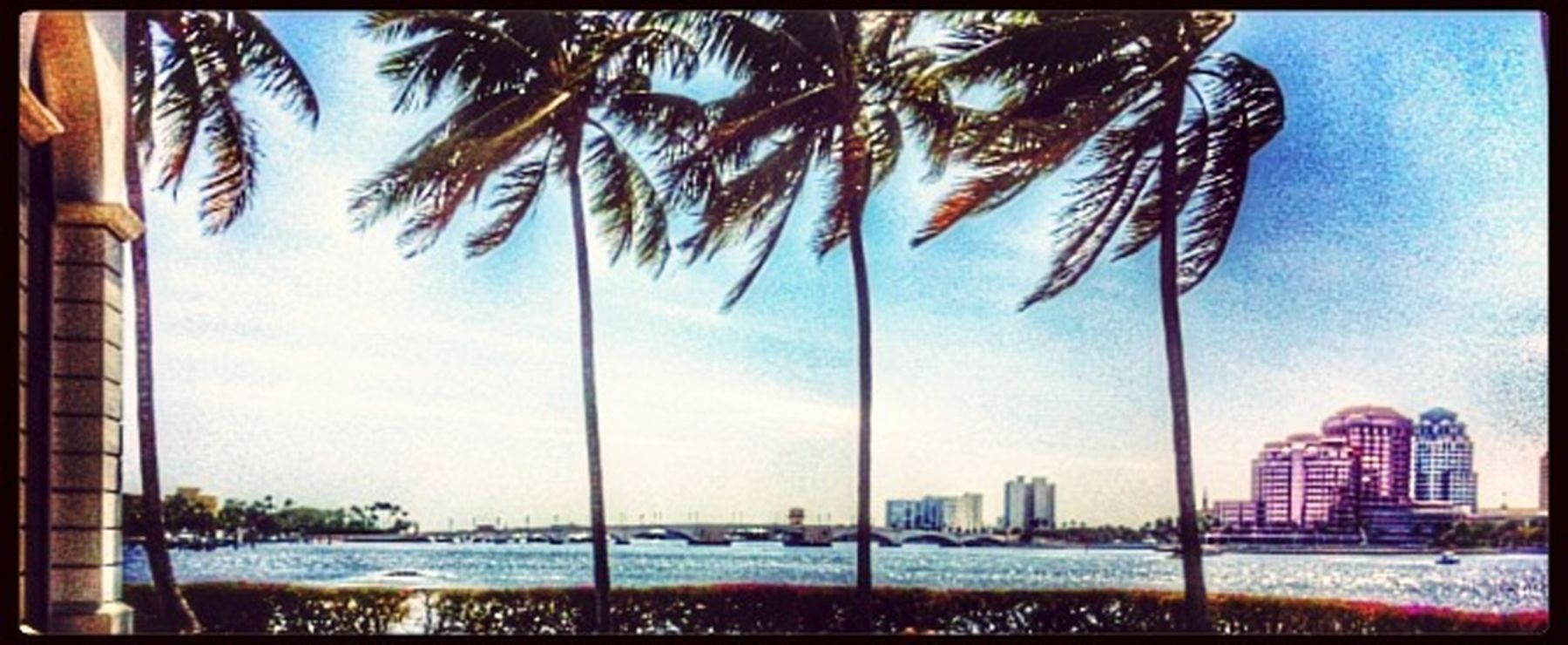 My Town West Palm Beach Florida Palm Trees i love my home town its so beautiful. I love loving where others vacation!