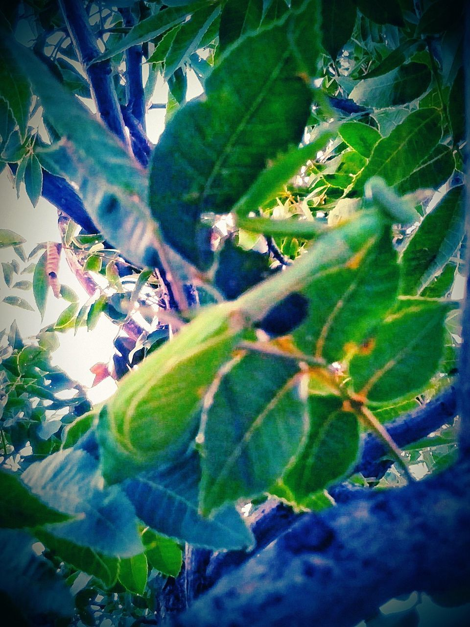 leaf, growth, nature, green color, plant, tree, no people, day, outdoors, beauty in nature, close-up, branch, freshness