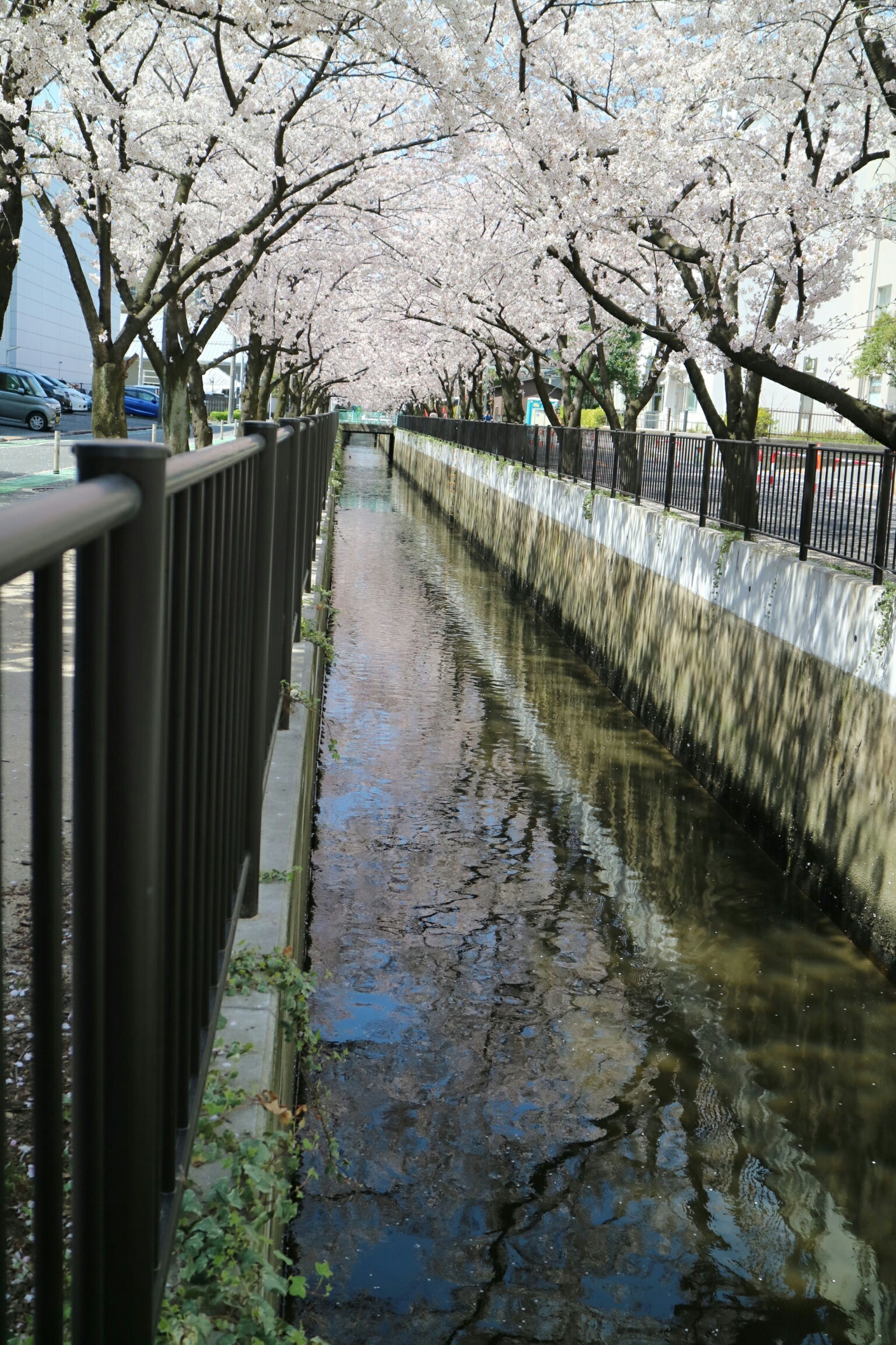 water, tree, railing, bridge - man made structure, built structure, footbridge, connection, reflection, branch, architecture, the way forward, canal, bare tree, nature, river, tranquility, bridge, day, outdoors, lake