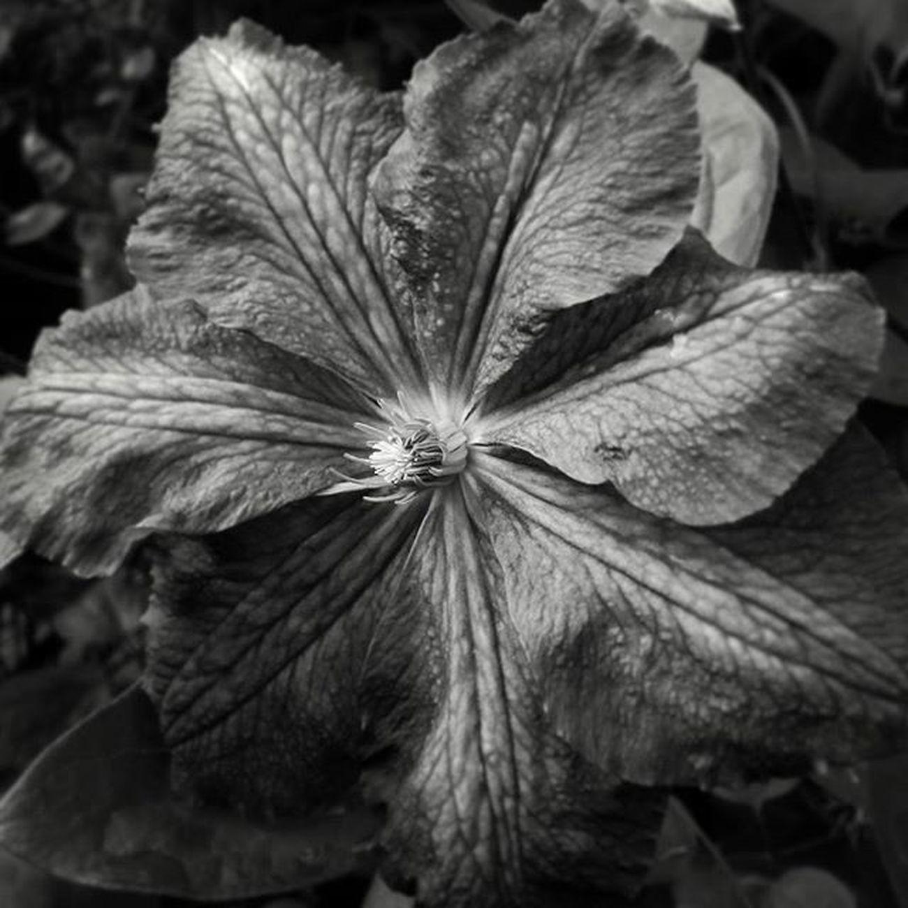 Blackandwhite Flowercloseup Flowerperfection Naturelovers nature natural natureperfection
