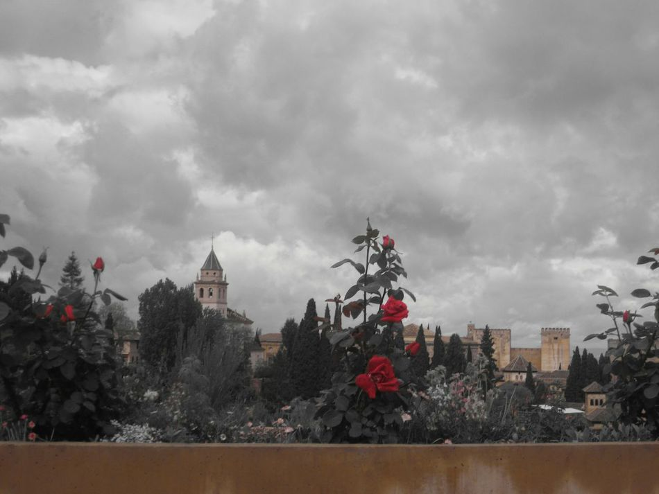 La Alhambra Vistas Desde La Alhambra Granada Architecture Nature EyeEmNewHere Lugares Magicos Llocsambencant Rosas Rojas Red Red Rose Travel Destinations History Architecture Art And Architecture Ancient History Cloudy Day