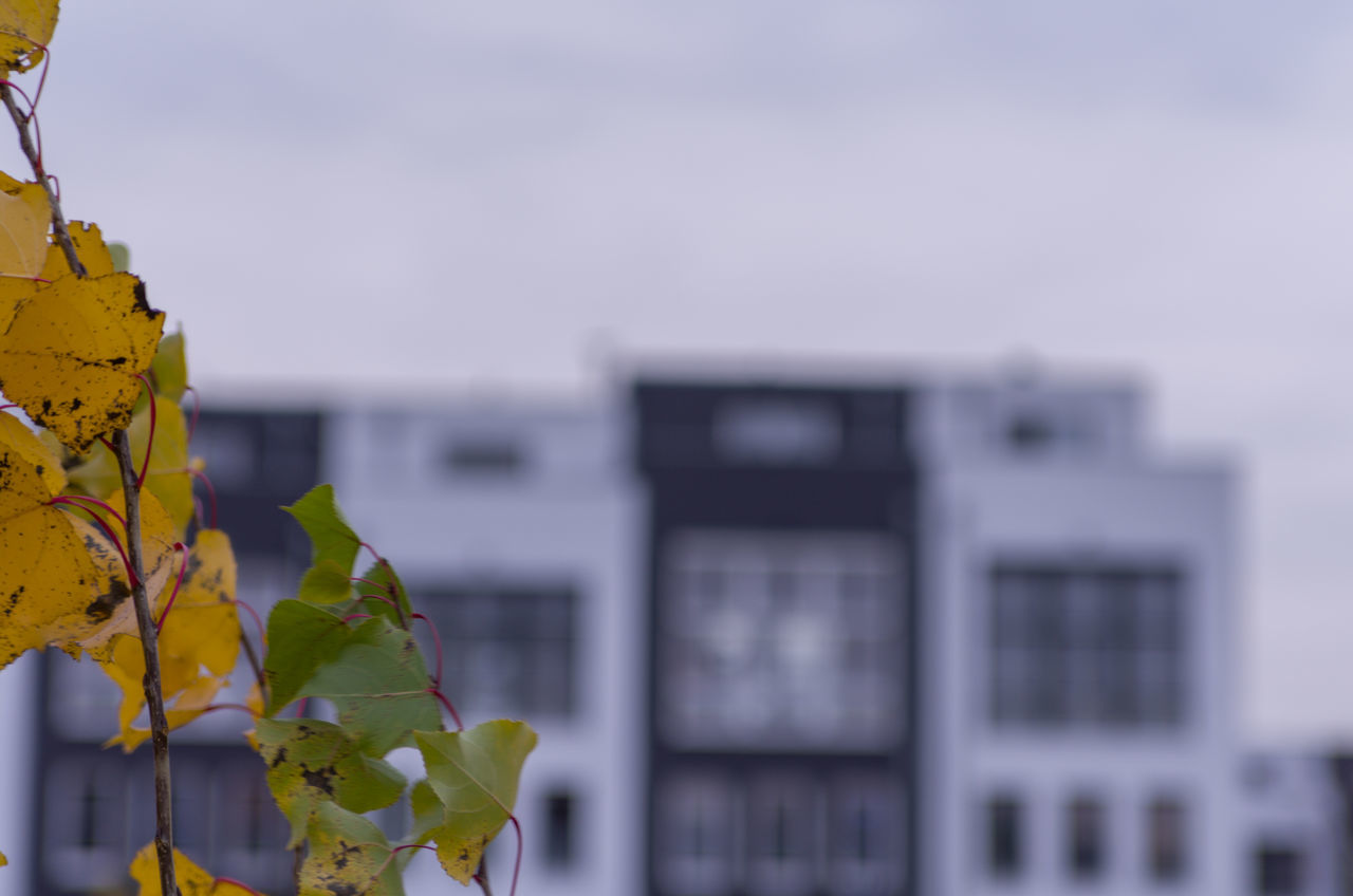 building exterior, focus on foreground, architecture, no people, leaf, outdoors, built structure, day, close-up, plant, nature, beauty in nature, sky
