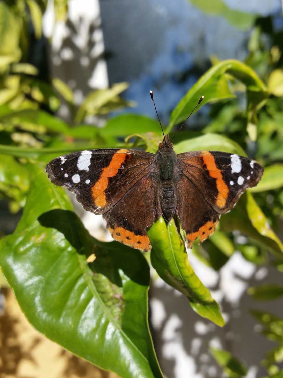 animal themes, one animal, insect, animals in the wild, leaf, butterfly - insect, plant, nature, animal wildlife, butterfly, green color, no people, close-up, outdoors, focus on foreground, day, beauty in nature, growth, fragility, freshness, perching