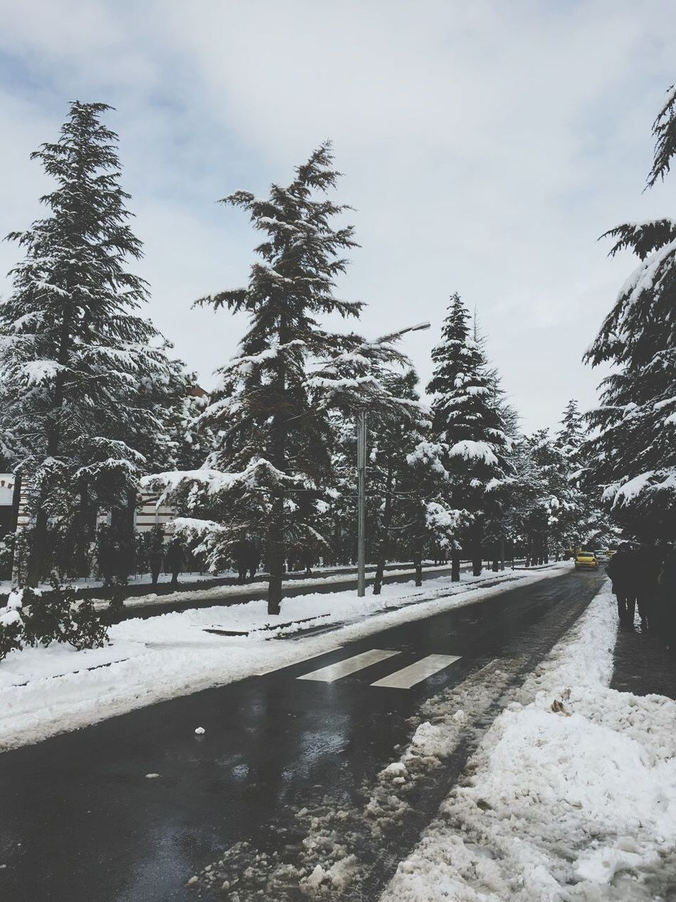 Snow Winter Cold Temperature Tree Outdoors Sky Nature Cloud - Sky Day Beauty In Nature Snowing People Anadoluuniversitesi University Campus University