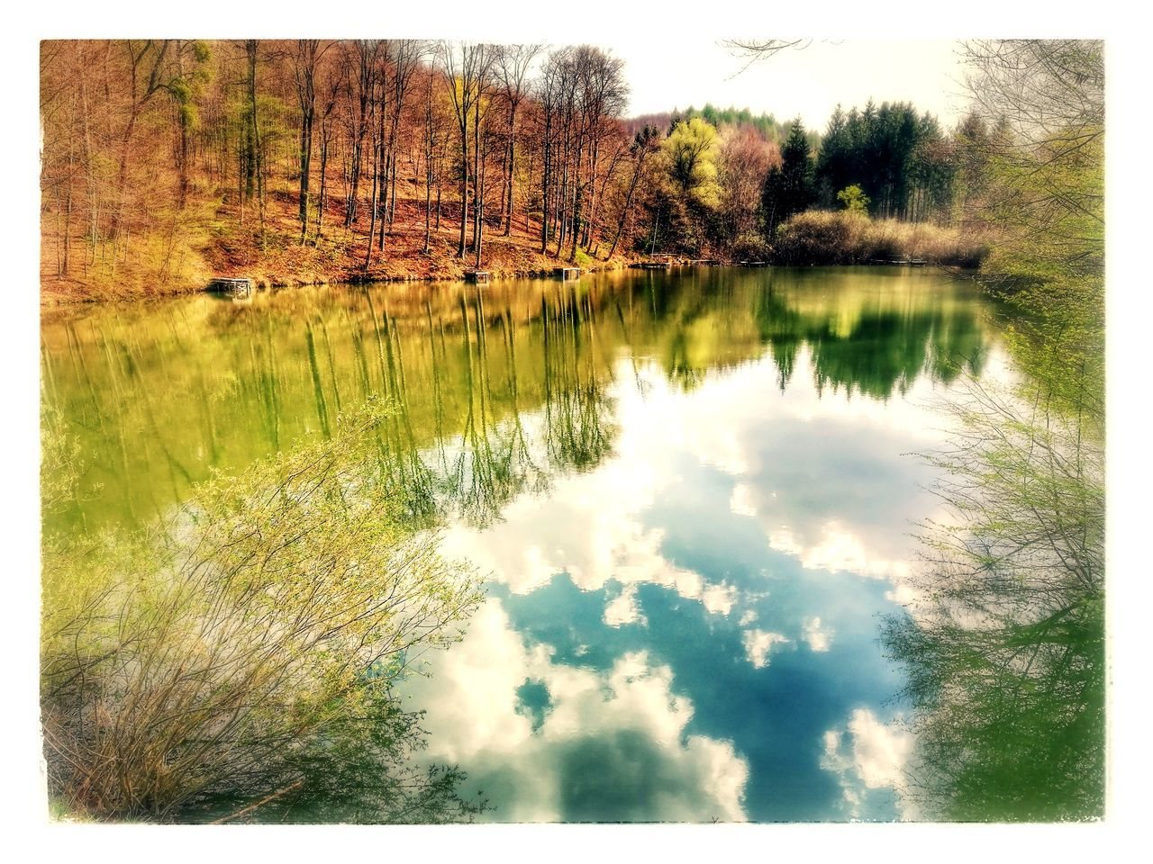 reflection, tree, water, tranquil scene, lake, nature, tranquility, beauty in nature, scenics, outdoors, no people, day, idyllic, forest, landscape, sky, grass