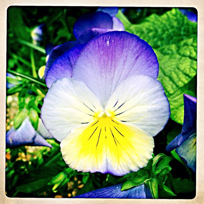 iPhone + hipstamatic IPhone Iphone 5 Flowers